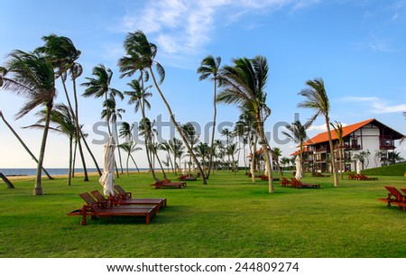 Palm trees on the beach of the hotel  ocean