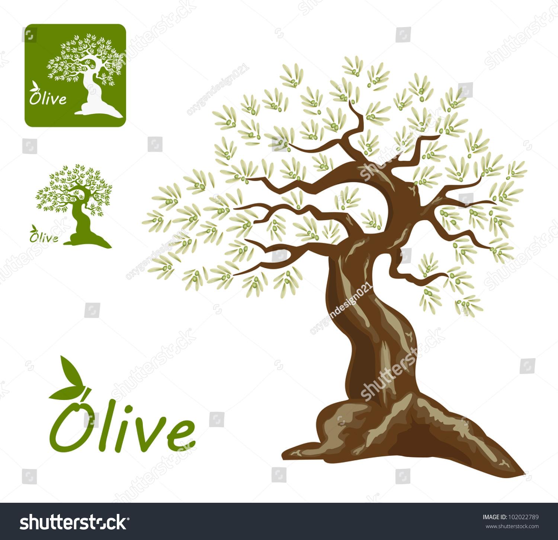 一个古老的橄榄树和一个有趣的橄榄树唱橄榄产品和