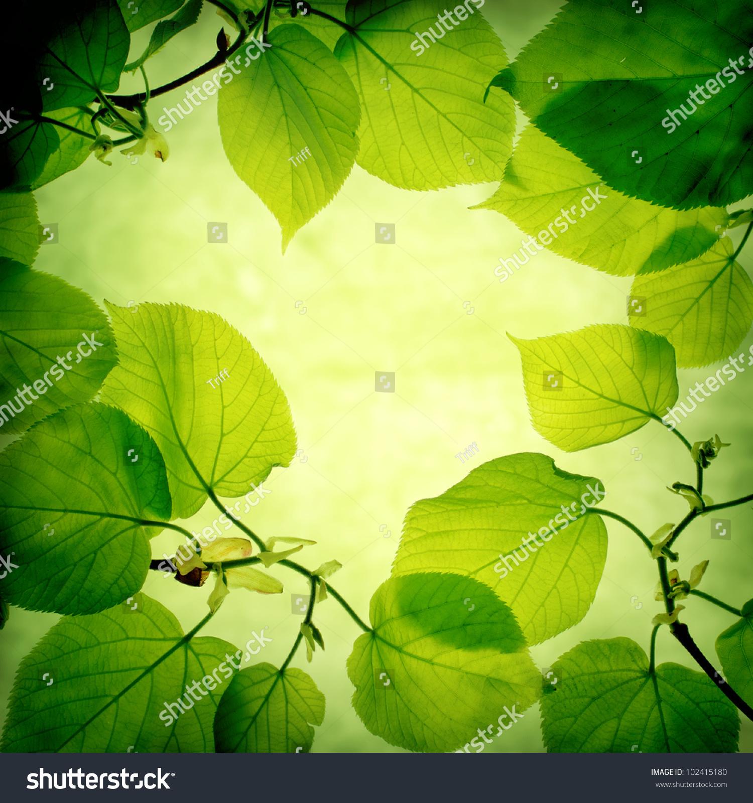 绿叶背景-背景/素材,自然-海洛创意(hellorf)-中国-.