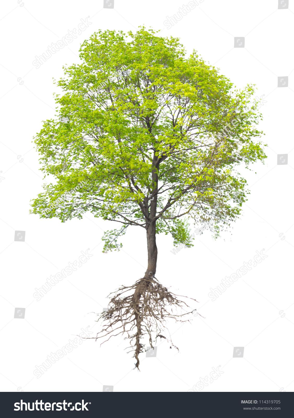 白色背景上的一棵树-物体,自然-海洛创意(hellorf)--.