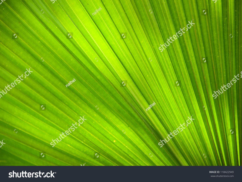 抽象的形象自然绿色棕榈叶-背景/素材,自然-海洛创意