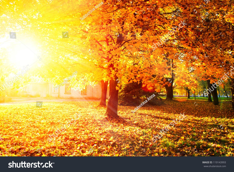 秋天的树和树叶-自然,公园/户外图片
