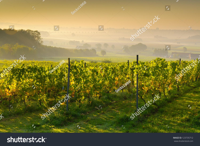 壁纸 草原 成片种植 风景 植物 种植基地 桌面 1500_1096
