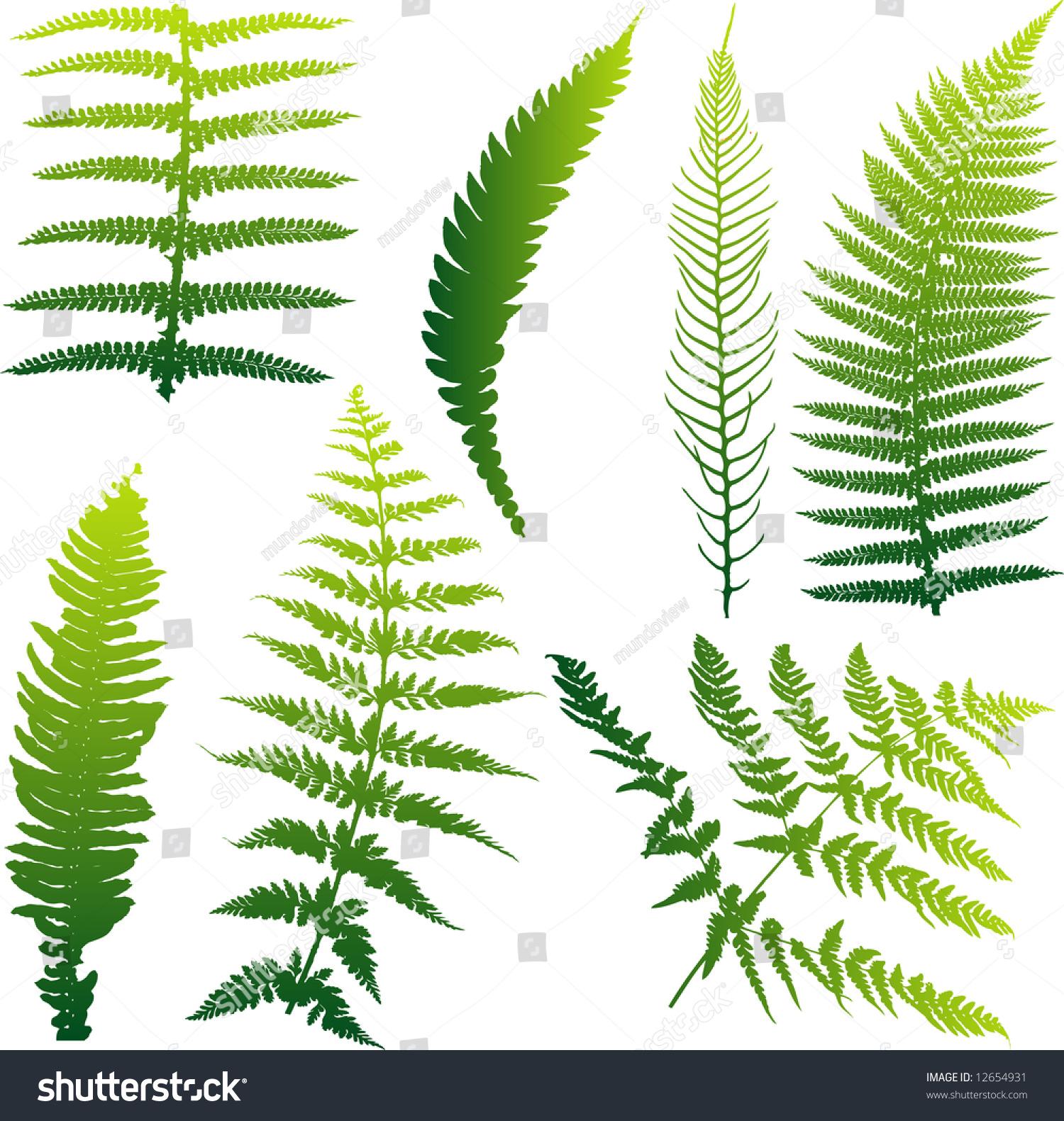 从新西兰七矢量蕨类植物的集合.颜色可以很容易地改变