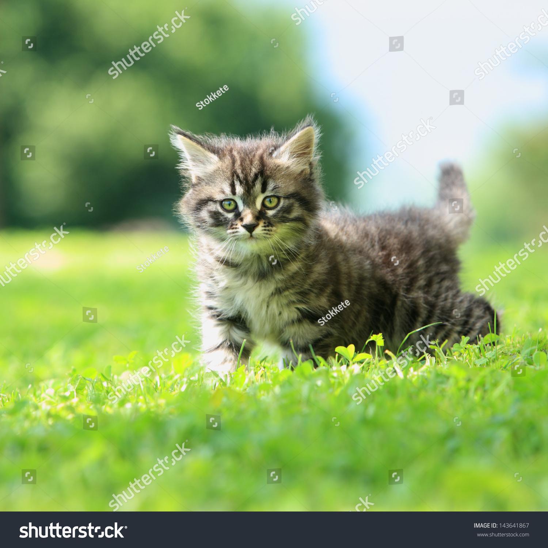 可爱的小猫在草地上玩耍-动物/野生生物-海洛创意()-.