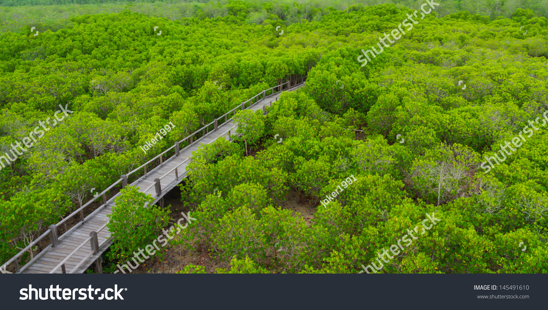 森林在petchaburi红树林,泰国.-自然,公园/户外-海洛