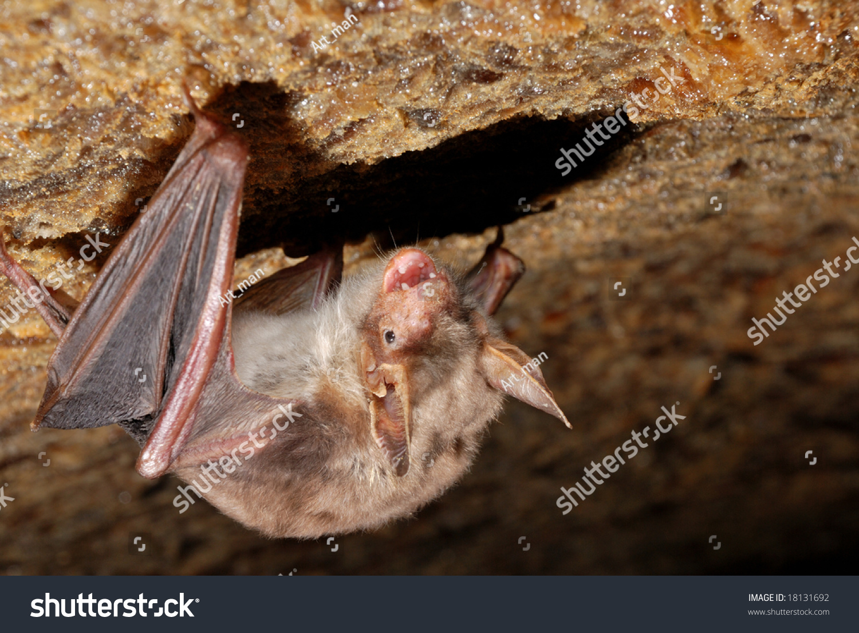 蝙蝠在墙上-动物/野生生物,自然-海洛创意(hellorf)-.