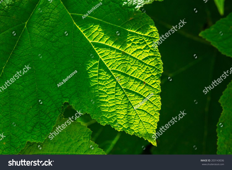 微信树叶阳光头像