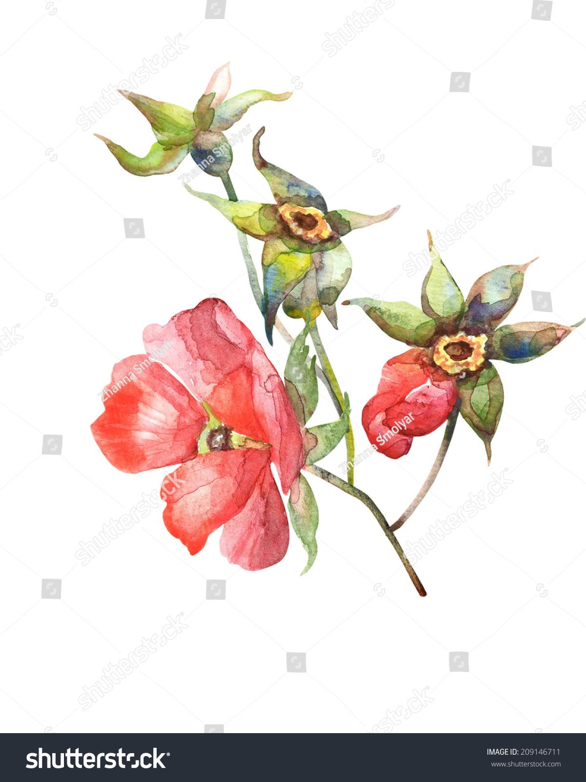 红玫瑰嫩枝.水彩手绘插图