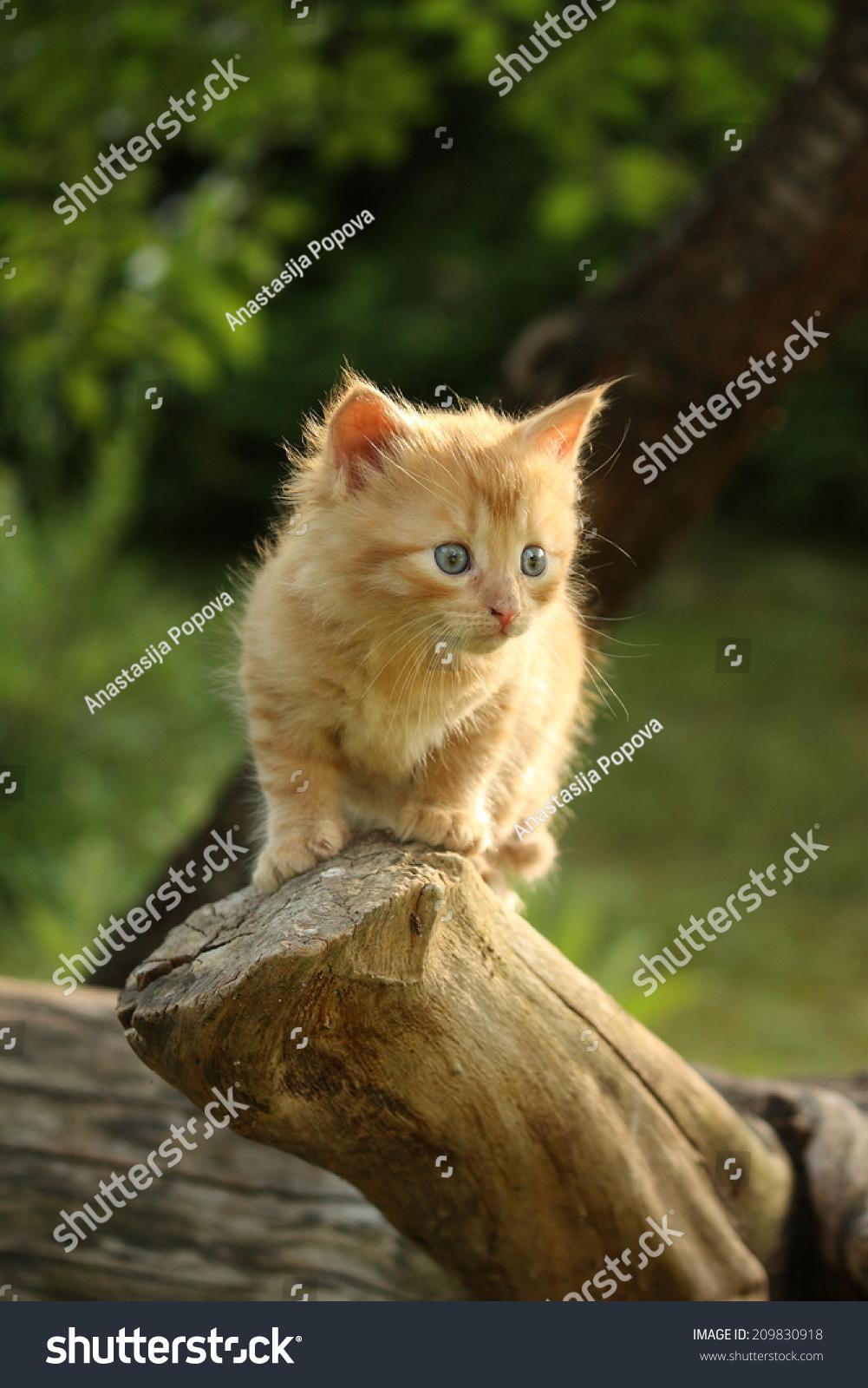 可爱的小猫咪在夏天爬上树-动物/野生生物