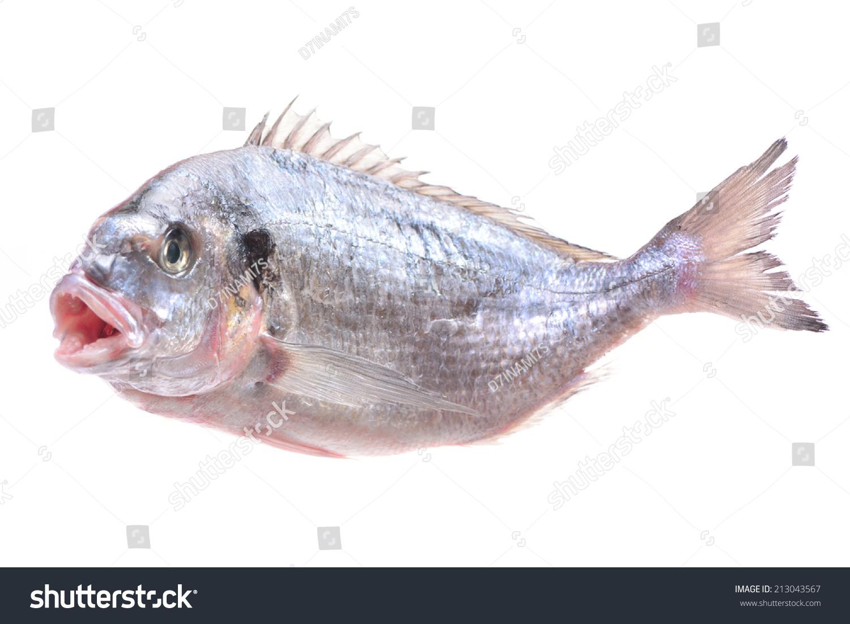 剑鱼鱼-动物/野生生物