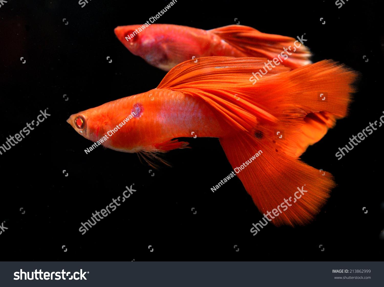 微信鱼好运头像风景
