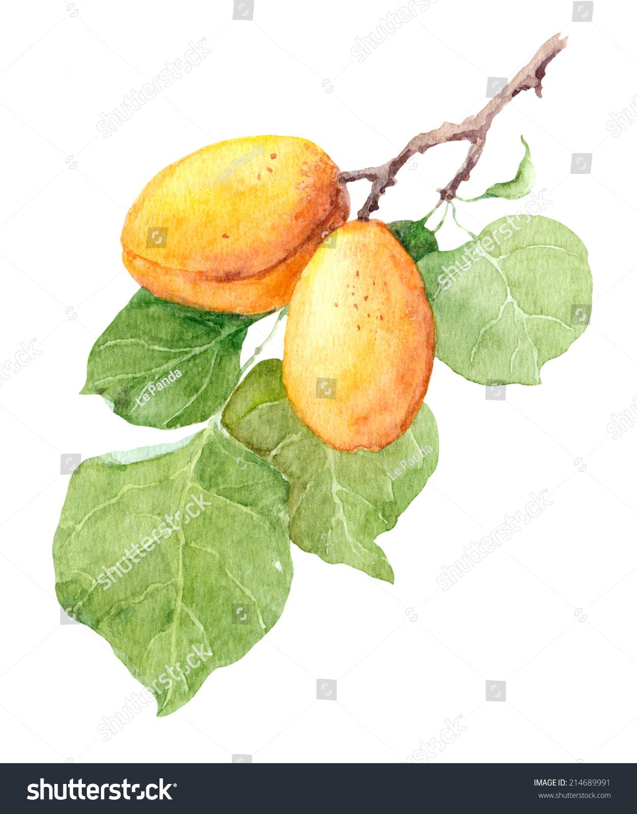 微信水果创意头像图片