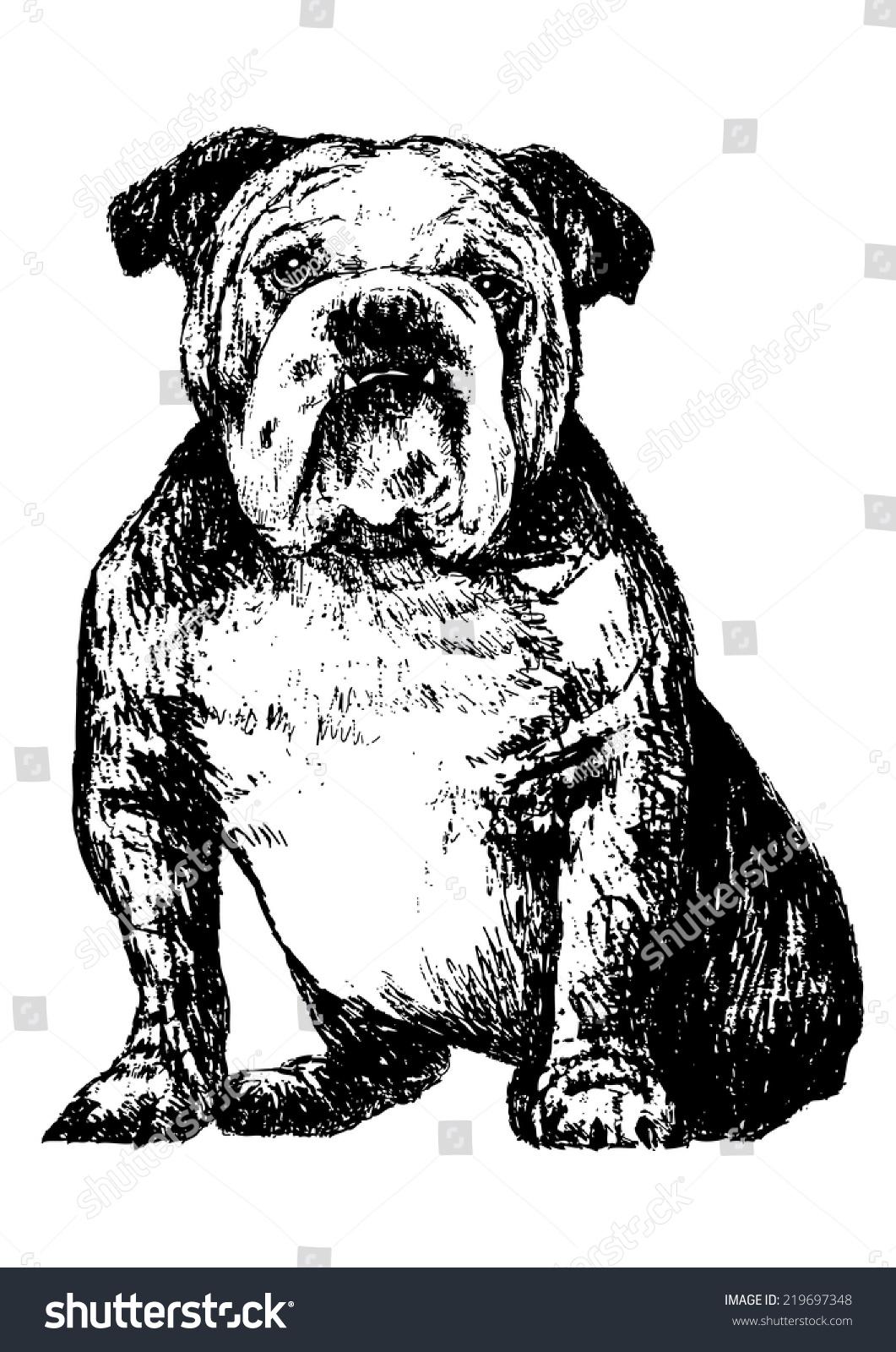 黑色和白色的牛头犬的照片