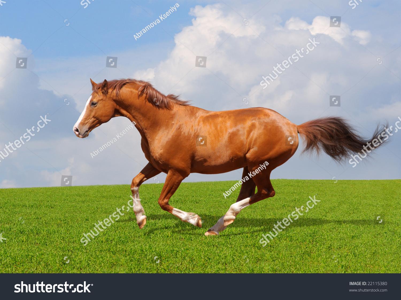 手工制作纸杯动物 马