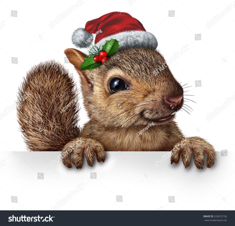 假日松鼠戴着圣诞老人的帽子用冬青和红浆果挂在一