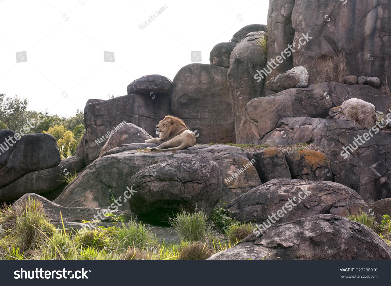 动物园的栖息地