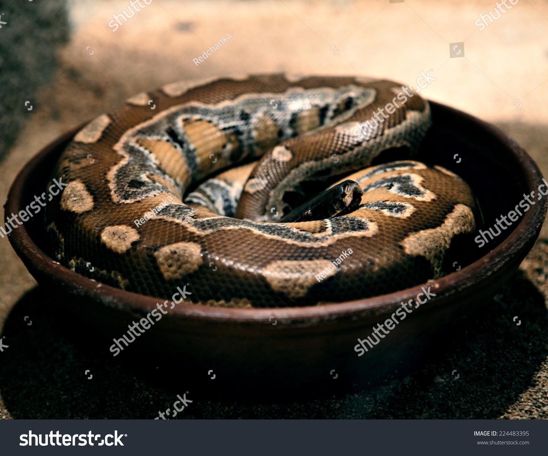 蛇-动物/野生生物,自然-海洛创意(hellorf)-中国独家