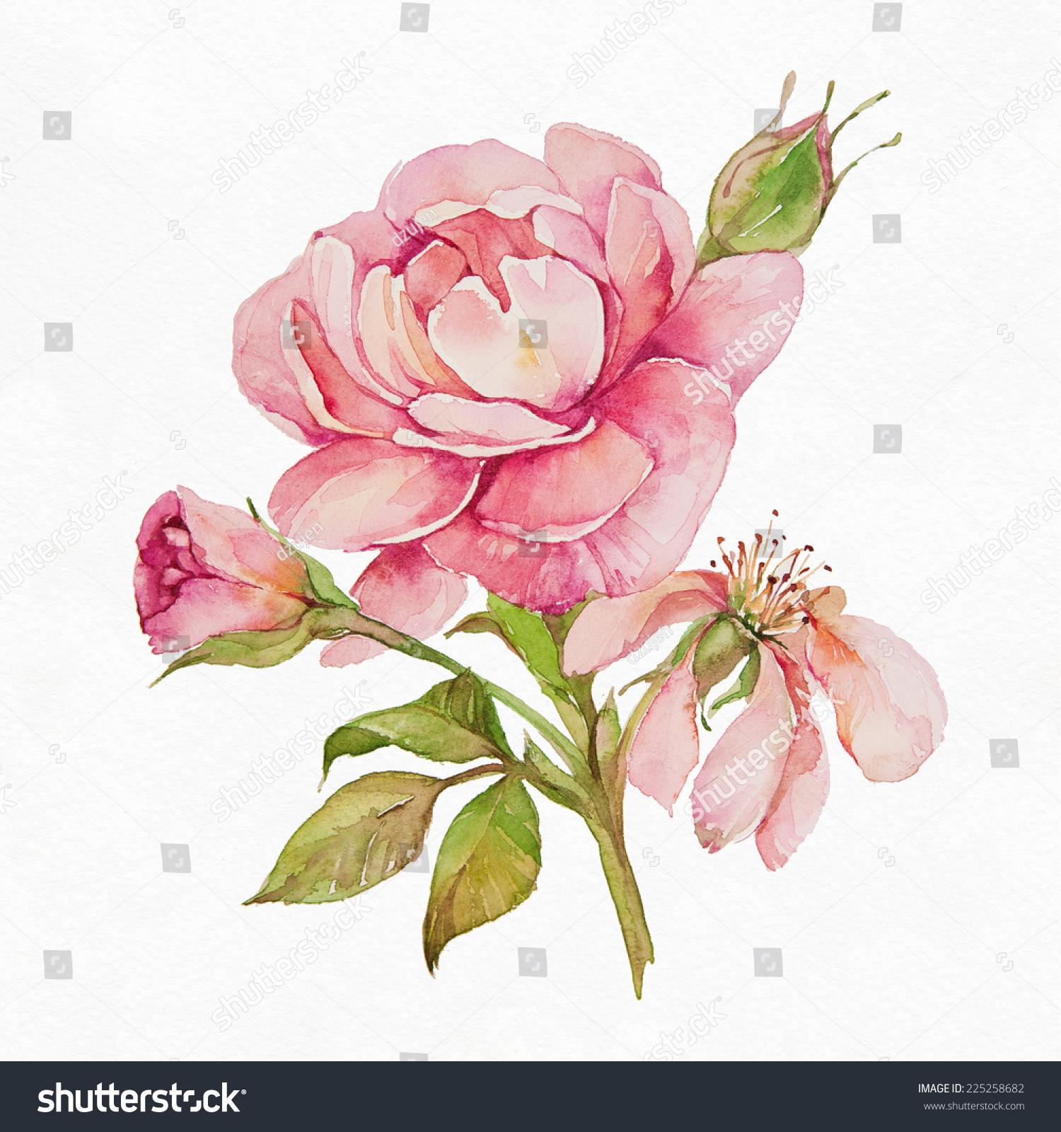 白色背景玫瑰.-背景/素材