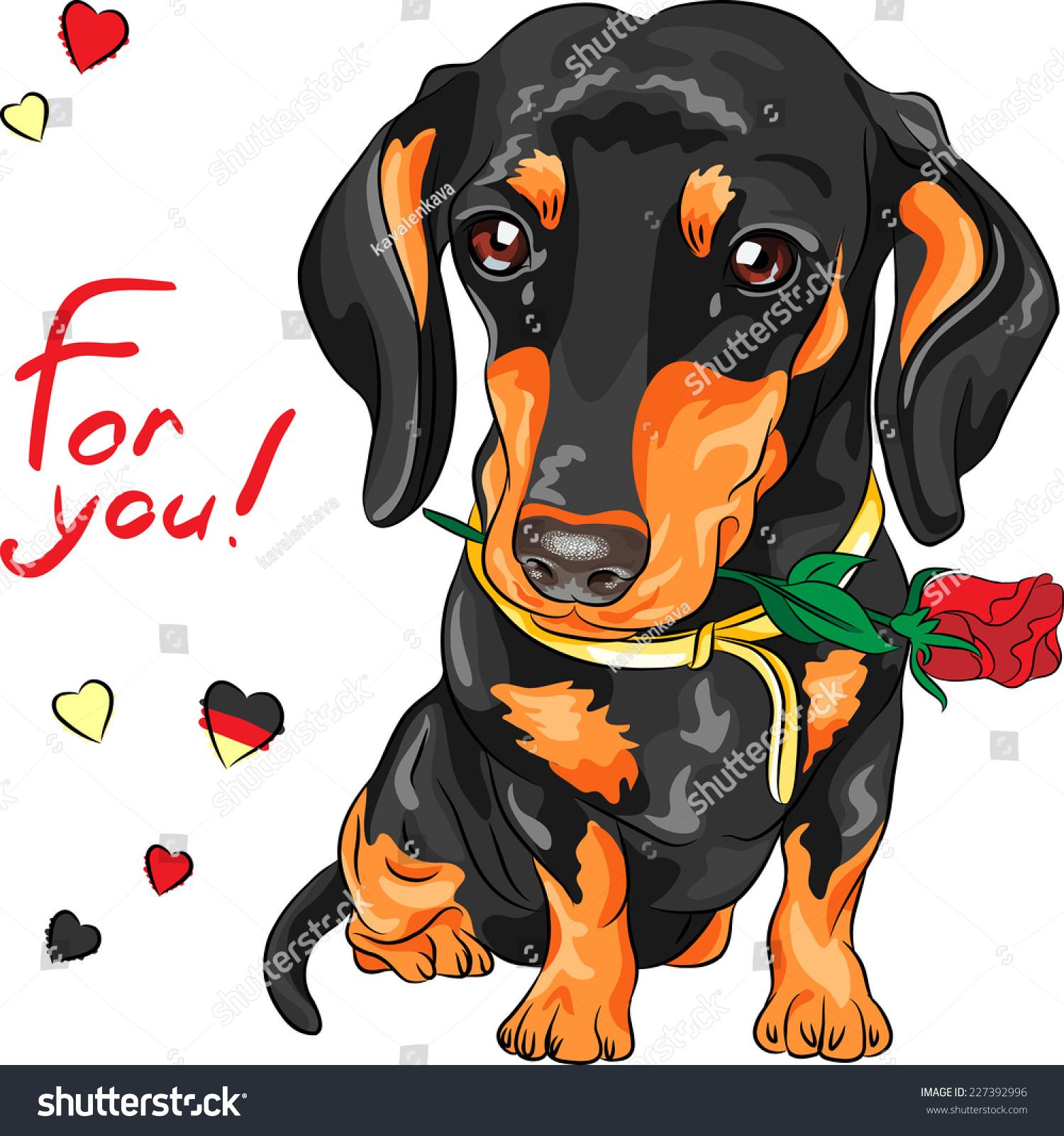 向量可爱的犬种腊肠和红色的花