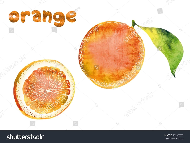 手绘插图美丽的橙色水果-食品及饮料