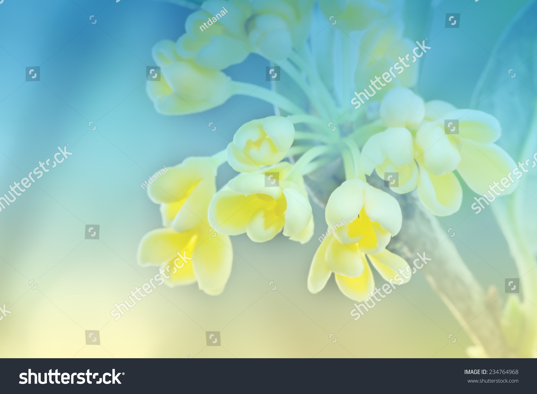 群桂花鲜花盛开的软背景风格