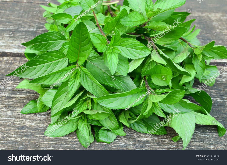 背景 壁纸 绿色 绿叶 盆景 盆栽 树叶 植物 桌面 1500_1094