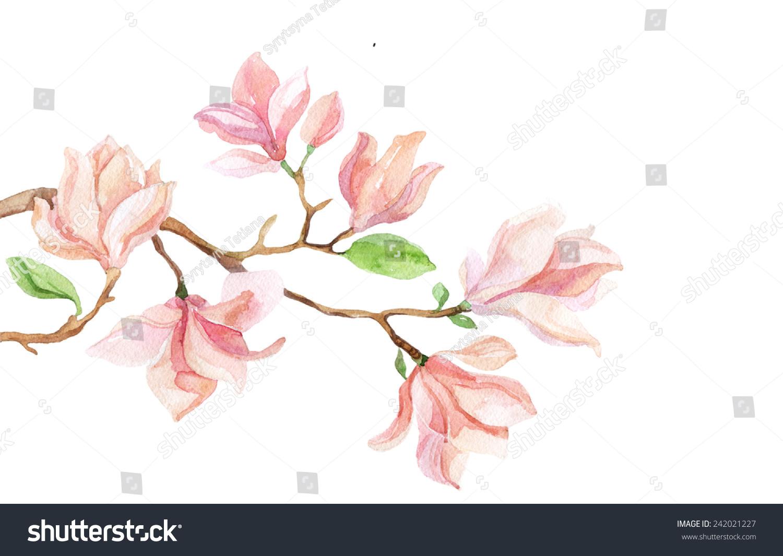 水彩与木兰花