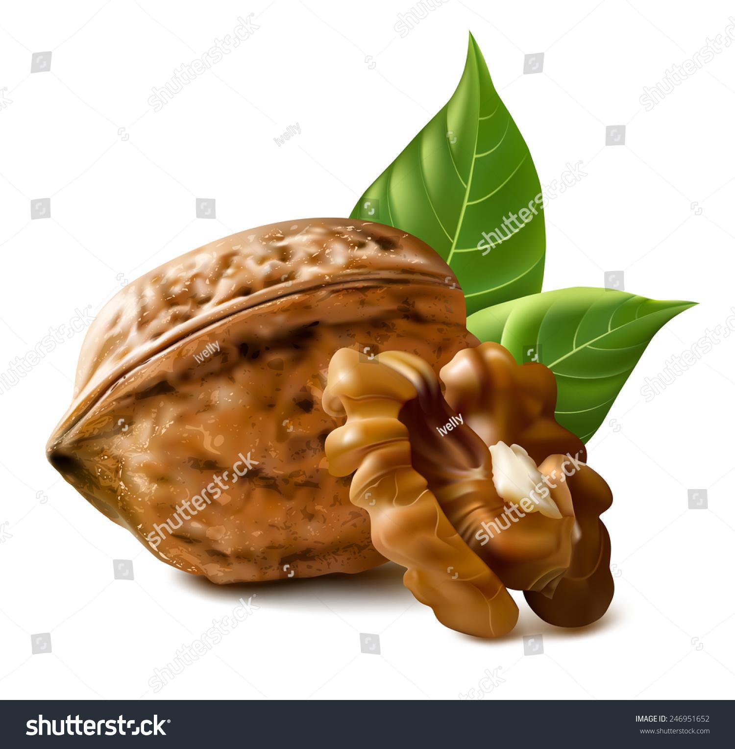 核桃用树叶和内核核桃.矢量插图.-食品及饮料,自然-()