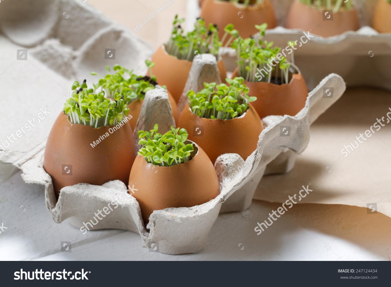 年轻的蔬菜生长在蛋壳-物体,自然-海洛创意(hellorf)图片