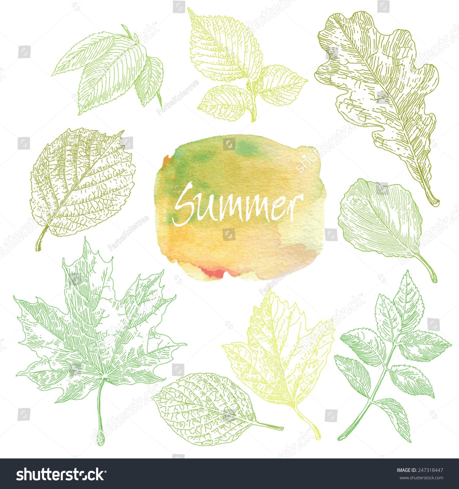 收集的非常详细的手绘叶子孤立在白色背景.水彩污点.夏天的背景.