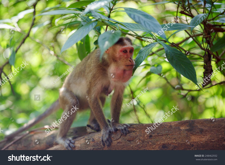小猴子坐在印度森林的叶子下面-动物/野生生物