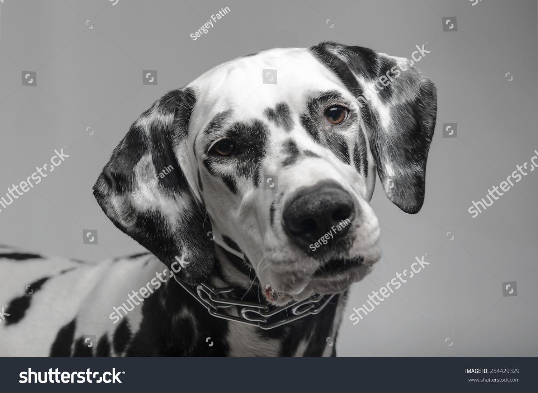 手绘狗 黑白线条