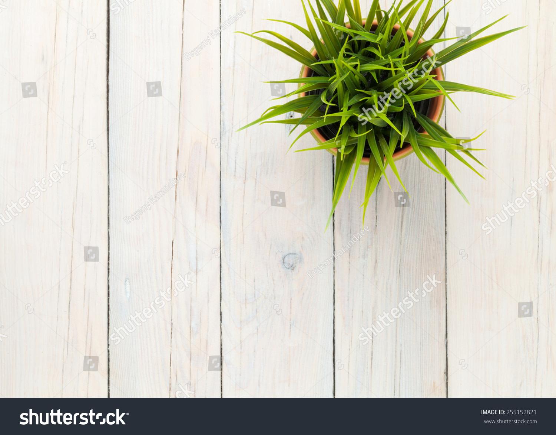 用复制空间的木桌子背景盆栽草-背景/素材,自然-海洛