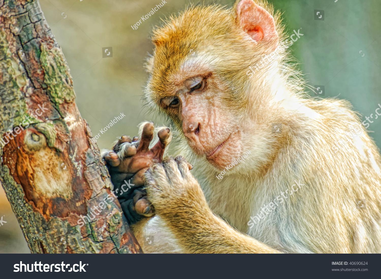 有趣的猴子看手指-动物/野生生物,交通运输-海洛创意
