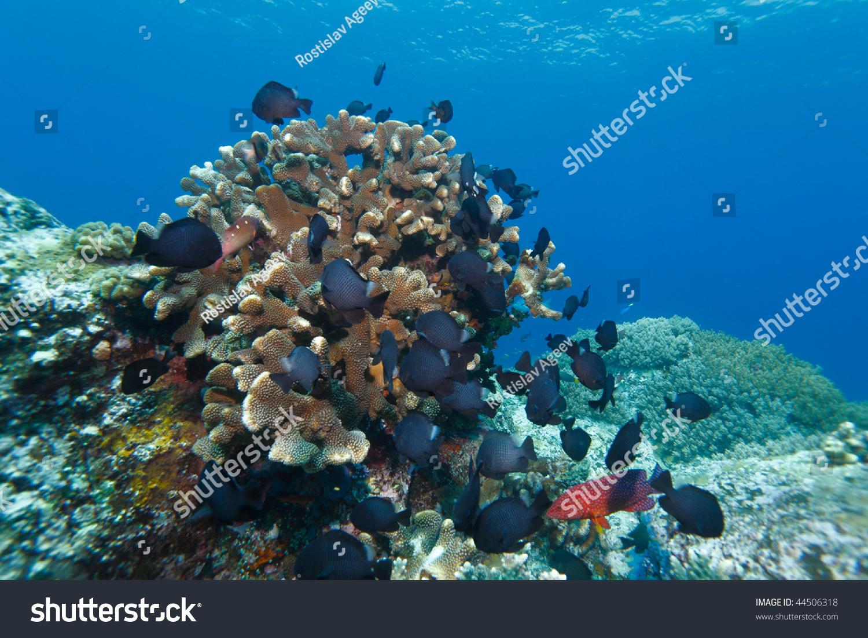 硬珊瑚和鱼类,石头城堡divesite,吉利·Lawa、N的科莫多岛,印度尼西亚 - 动物/野生生物,自然 - 站酷海洛创意正版图片,视频,音乐素材交易平台 - Shutterstock中国独家合作伙伴 - 站酷旗下品牌