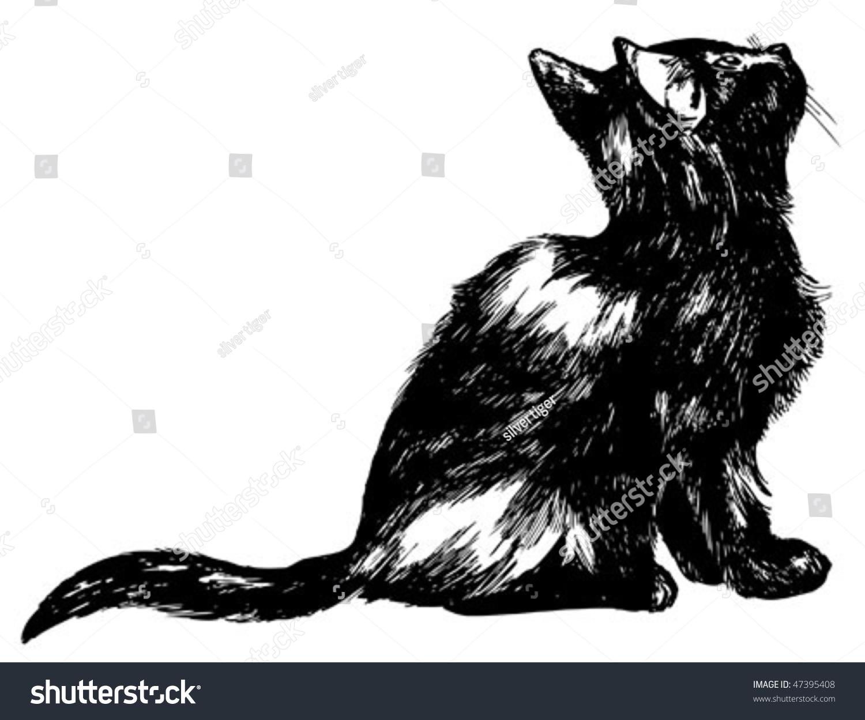 手绘猫抬头,详细的高品质油墨插图-动物/野生生物,/图
