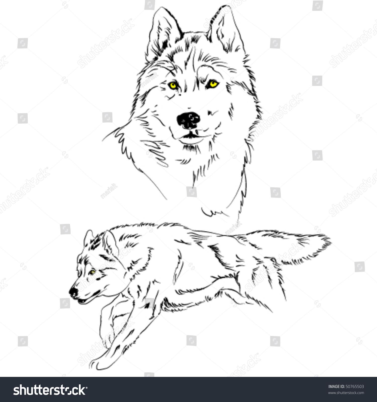 向量狼草图-动物/野生生物,插图/剪贴图-海洛创意()-.