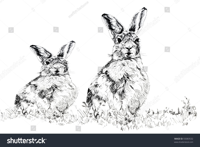 钢笔和墨水手绘插图的男性和女性兔子坐在一起,在白色