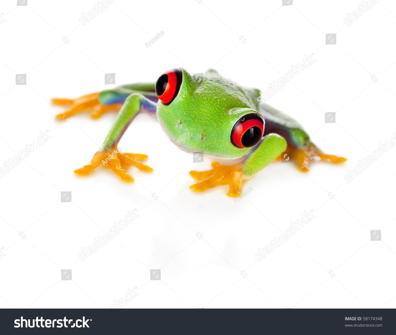 白色的红色眼睛的青蛙-动物/野生生物