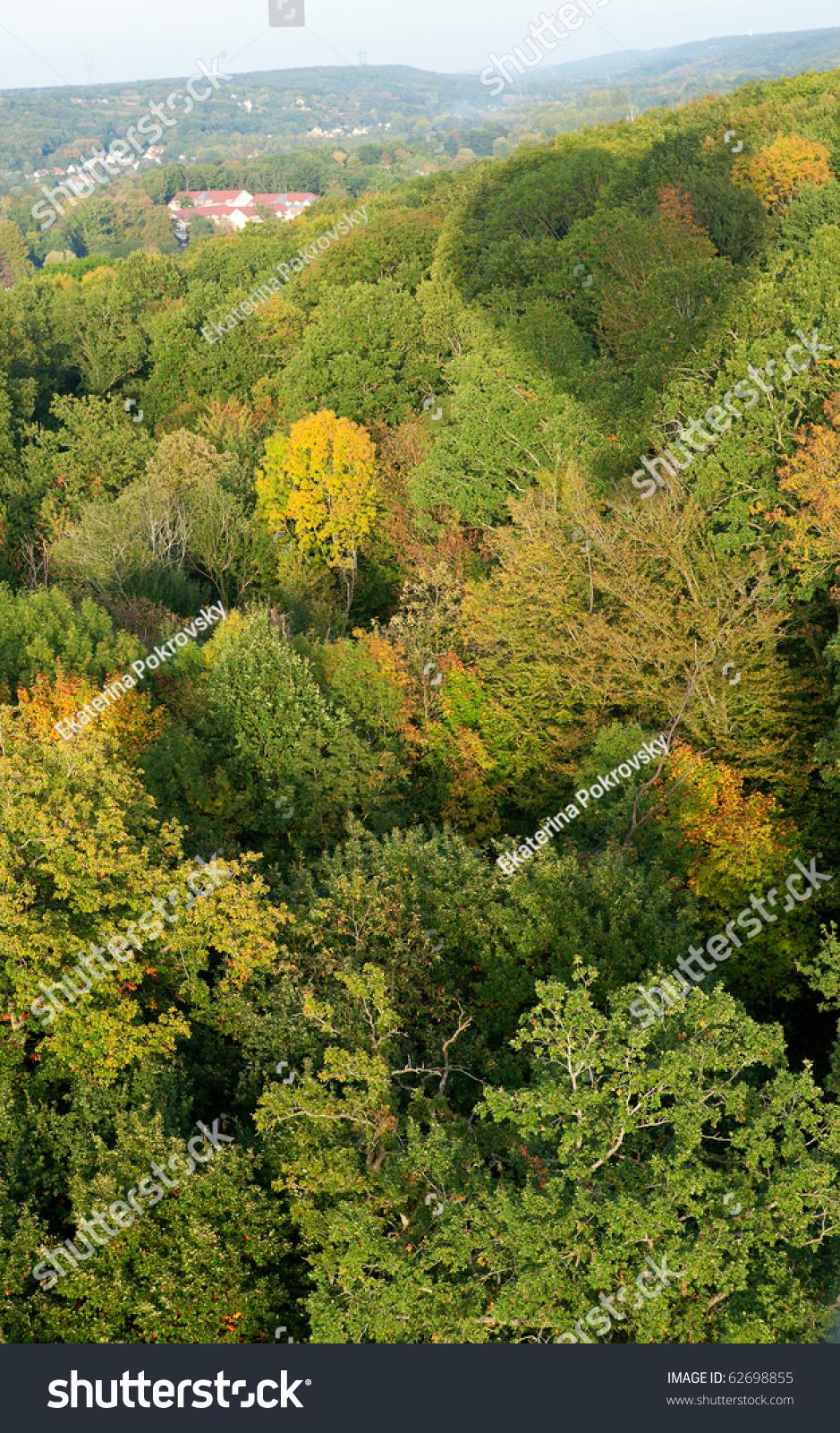 鸟瞰图的森林和一个热气球的影子.秋天的开始图片