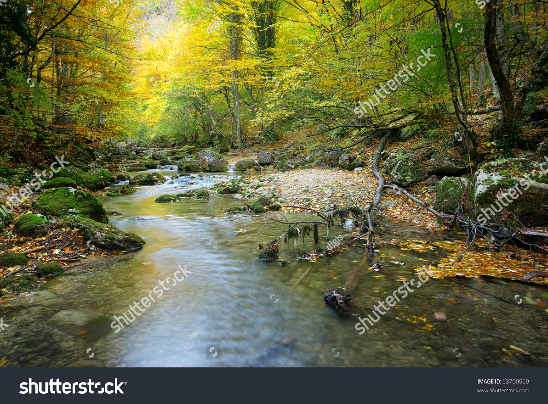微信头像树林风景图片