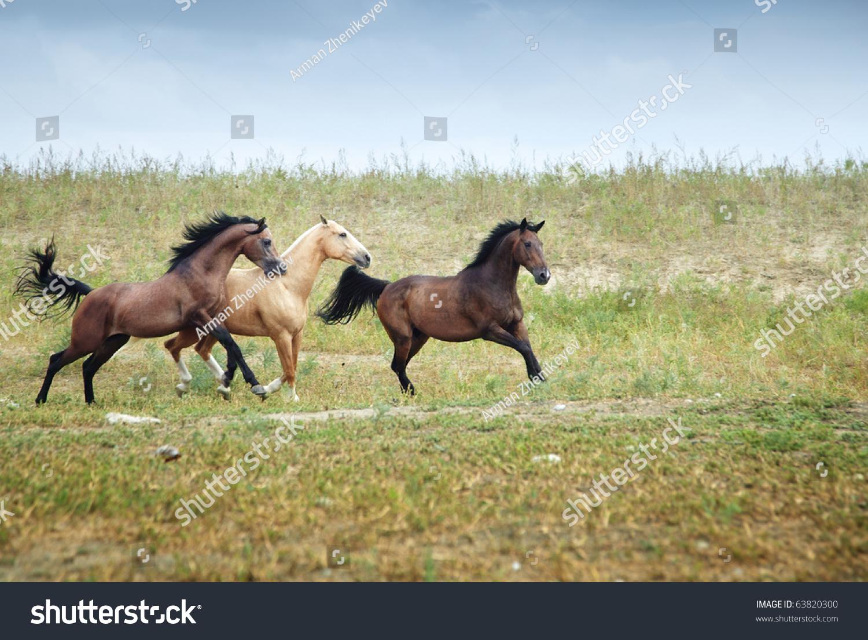 动物 马 骑马 1500