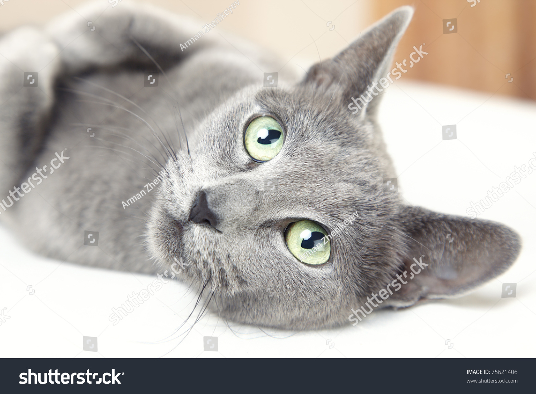 创意动物猫猫素描