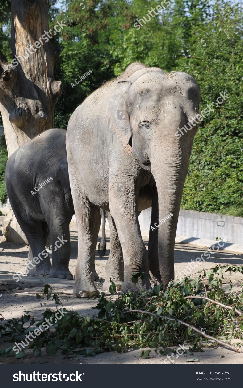 大象图片来自动物园-动物/野生生物