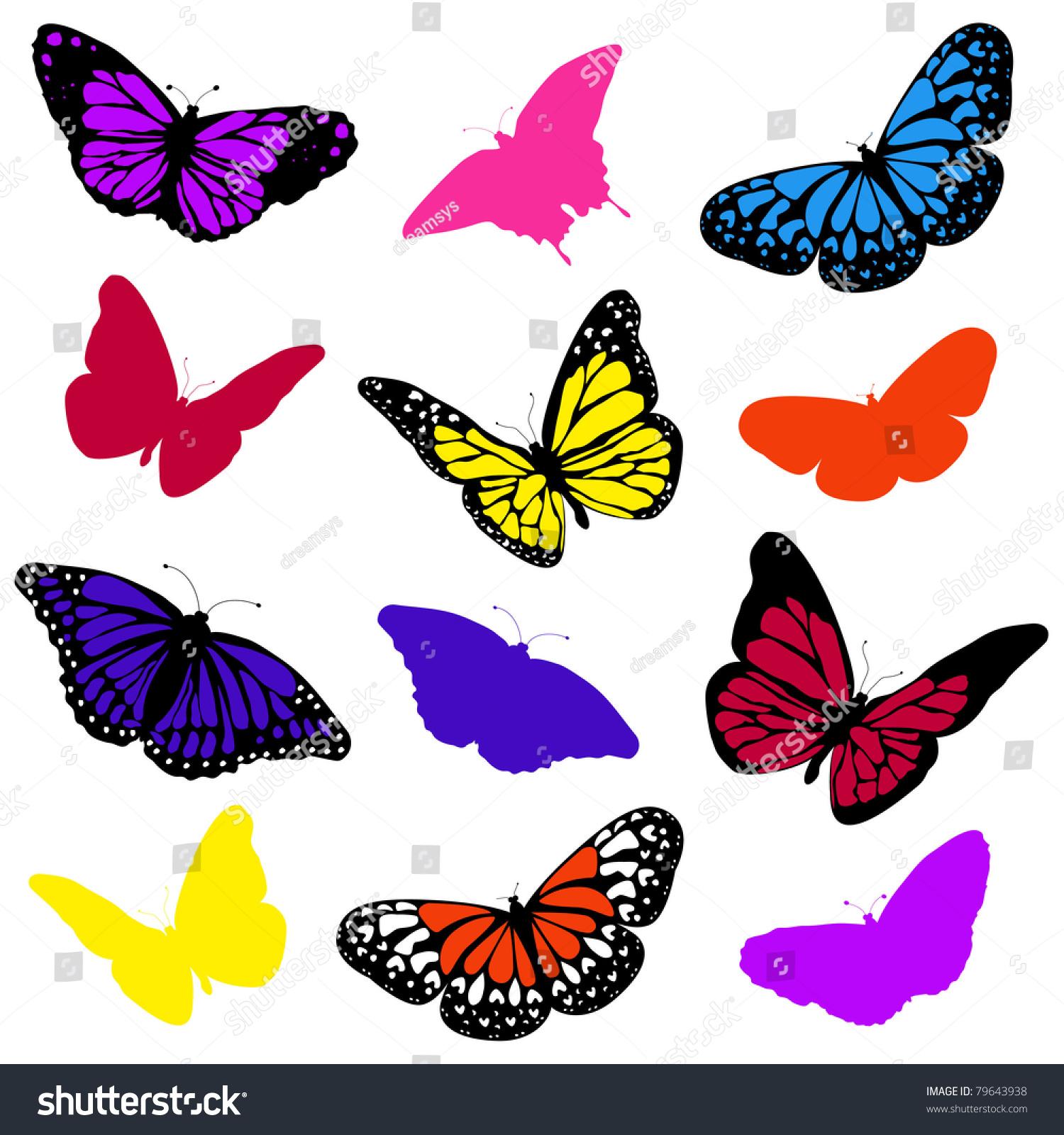 蝴蝶采集-动物/野生生物