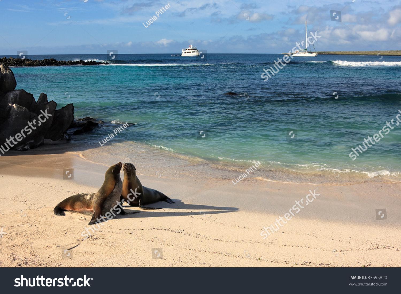 海豹岛的海滩上西班牙在加拉帕戈斯群岛-动物/野生