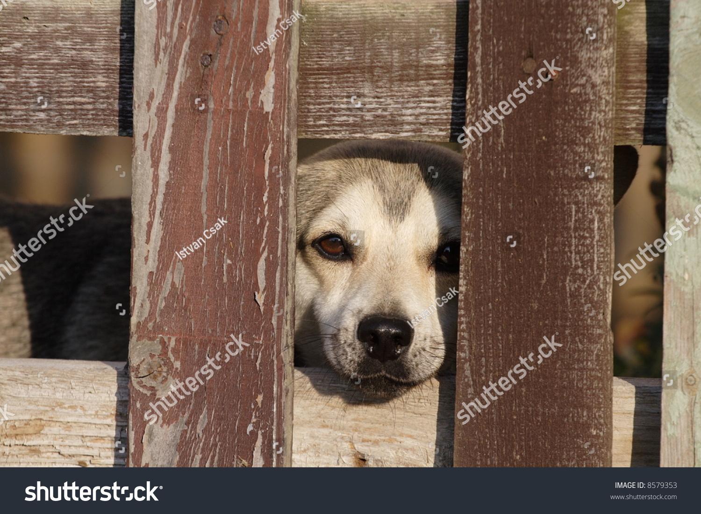 孤独悲伤的狗在篱笆后面-动物/野生生物