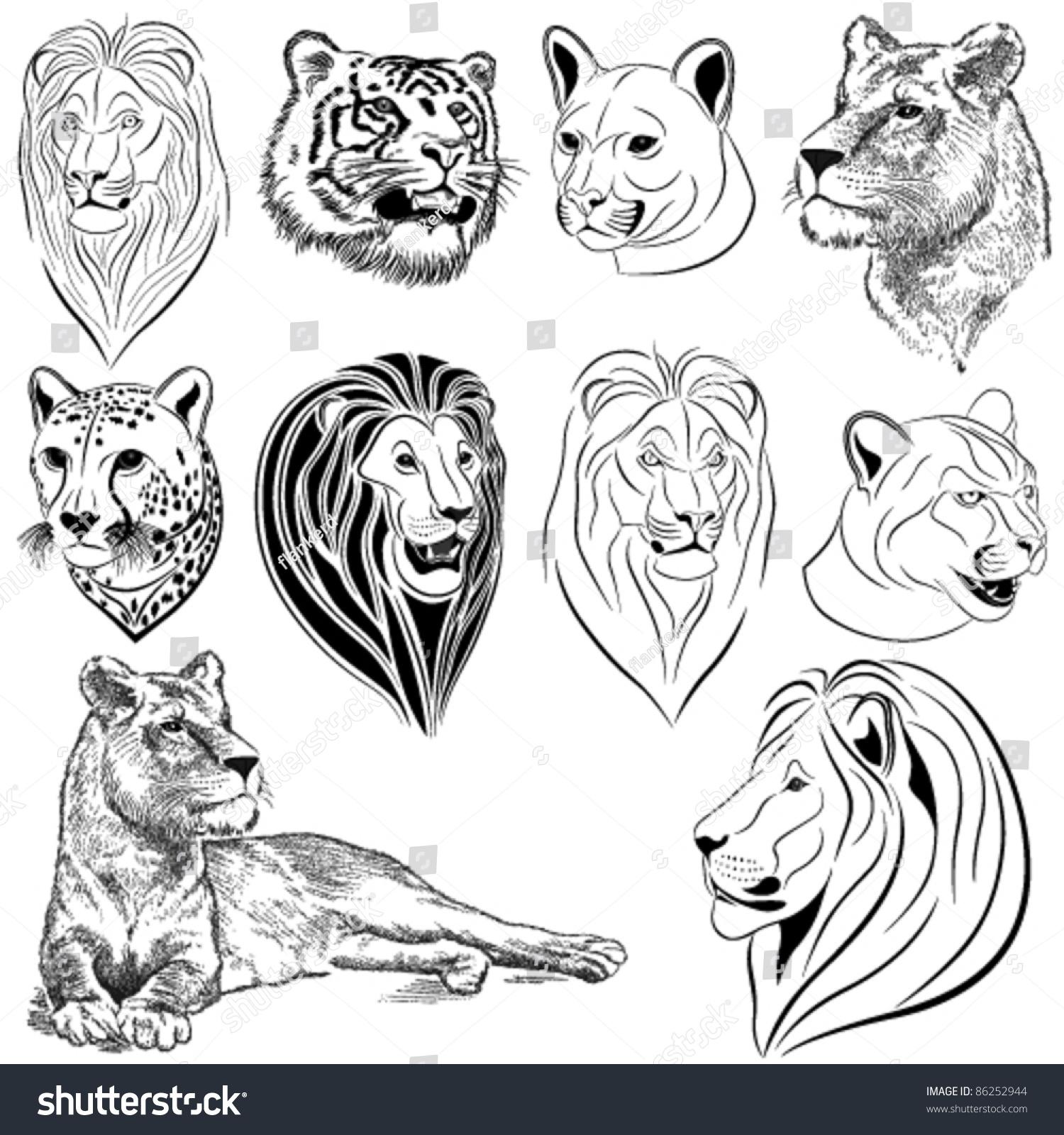 猎豹-动物/野生生物