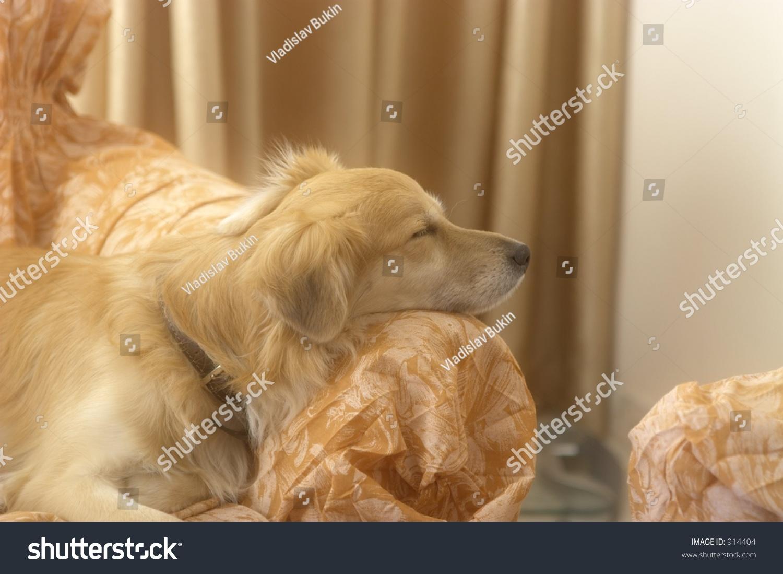 睡觉的狗,小狗-动物/野生生物-海洛创意(hellorf)